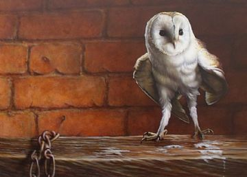Wayne Westwood Oil Painting Of A Barn Owl